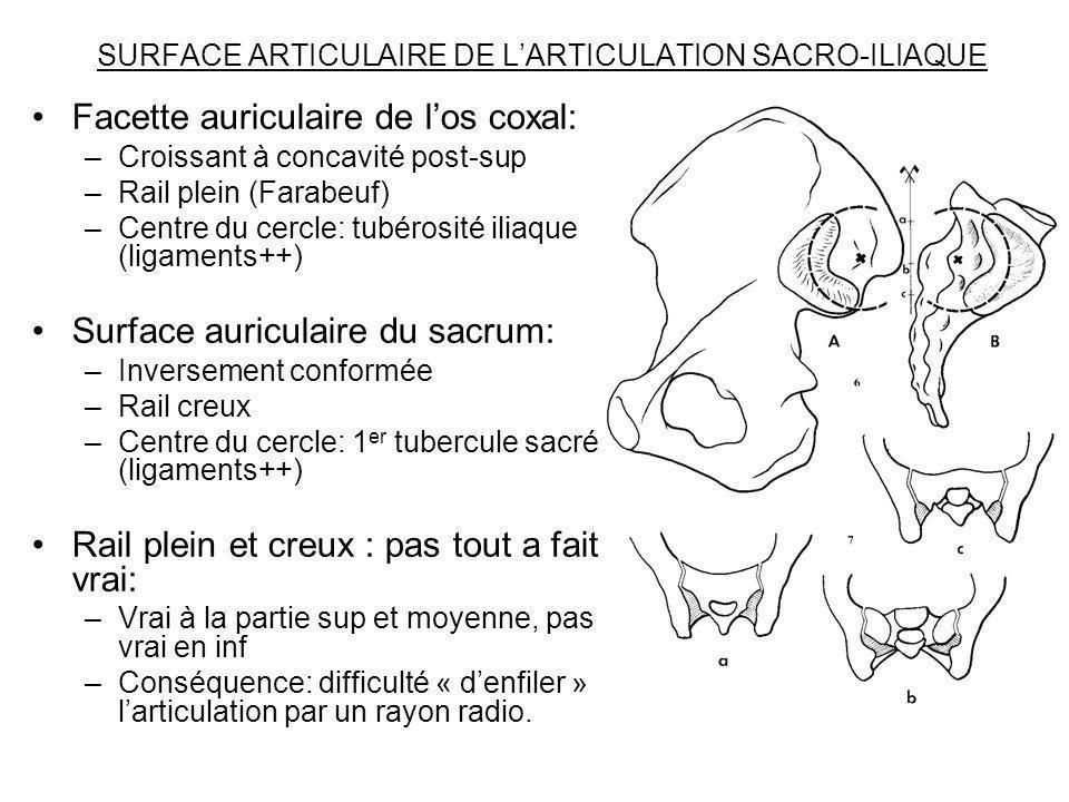 SURFACE ARTICULAIRE DE L'ARTICULATION SACRO-ILIAQUE