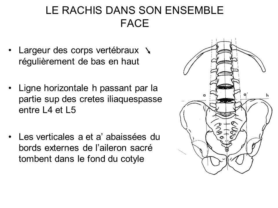 LE RACHIS DANS SON ENSEMBLE FACE
