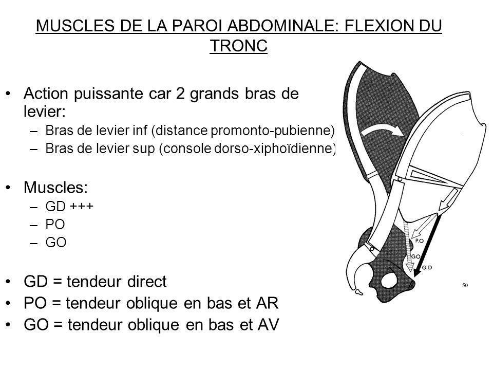 MUSCLES DE LA PAROI ABDOMINALE: FLEXION DU TRONC