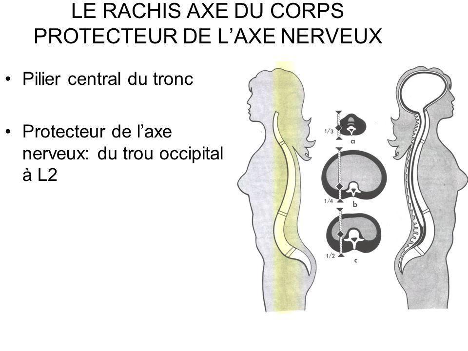 LE RACHIS AXE DU CORPS PROTECTEUR DE L'AXE NERVEUX