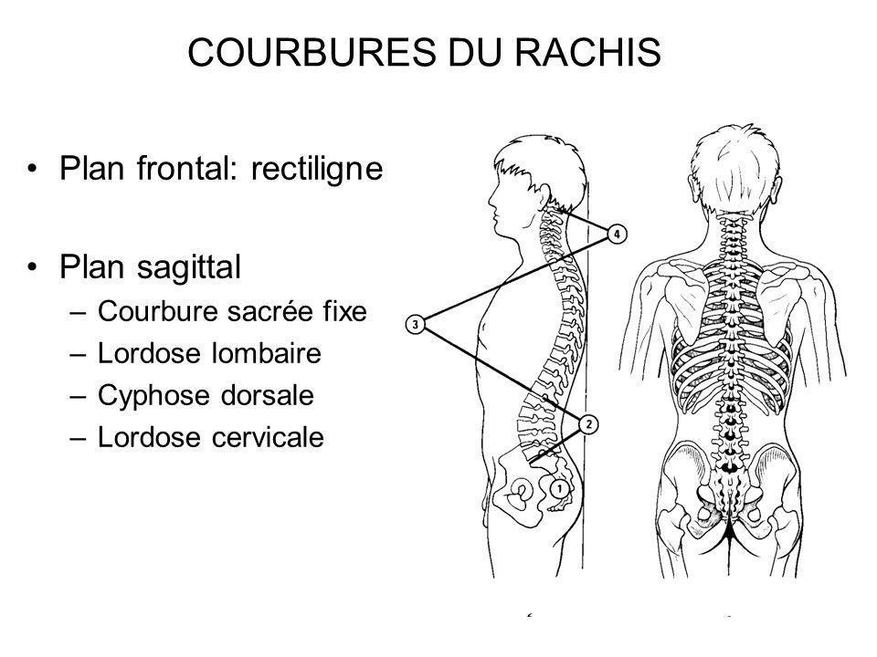 COURBURES DU RACHIS Plan frontal: rectiligne Plan sagittal
