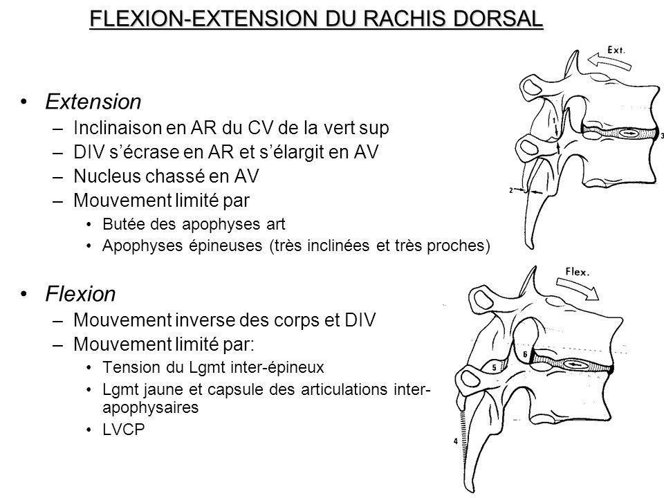FLEXION-EXTENSION DU RACHIS DORSAL