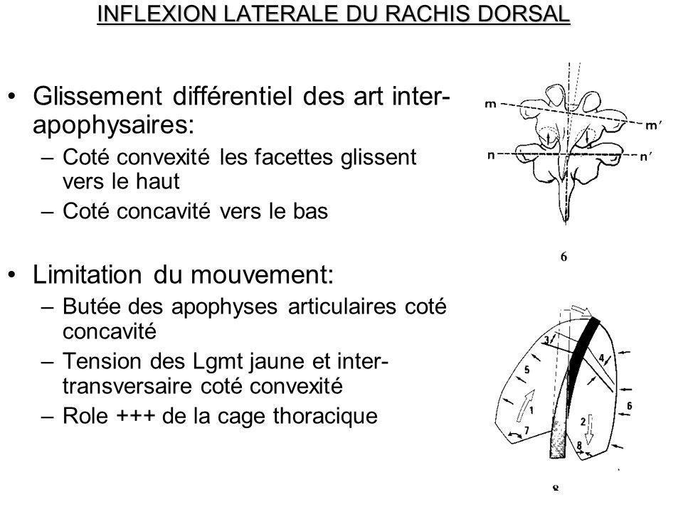 INFLEXION LATERALE DU RACHIS DORSAL