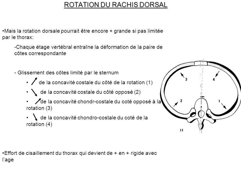ROTATION DU RACHIS DORSAL
