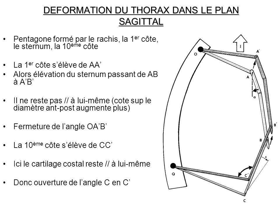 DEFORMATION DU THORAX DANS LE PLAN SAGITTAL