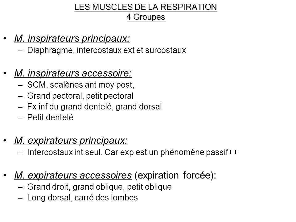LES MUSCLES DE LA RESPIRATION 4 Groupes