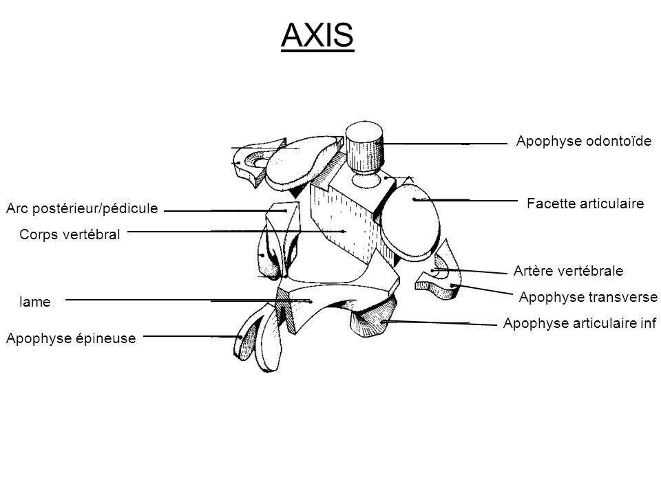 AXIS Apophyse odontoïde Facette articulaire Arc postérieur/pédicule
