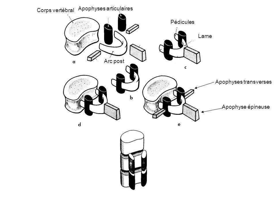 Apophyses articulaires Corps vertébral