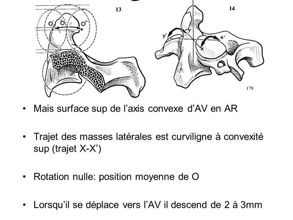Mais surface sup de l'axis convexe d'AV en AR