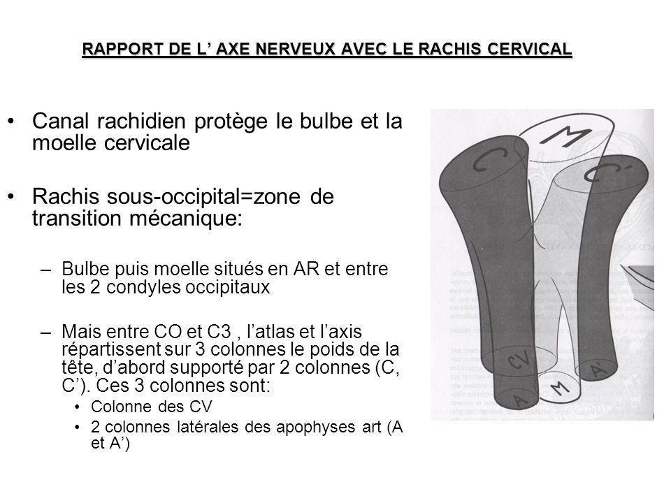 RAPPORT DE L' AXE NERVEUX AVEC LE RACHIS CERVICAL