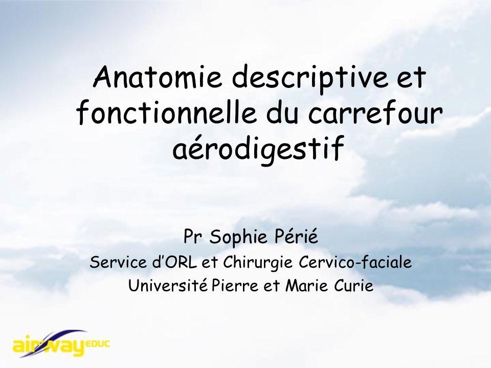 Anatomie descriptive et fonctionnelle du carrefour aérodigestif