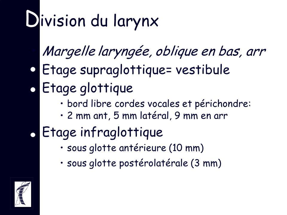 Division du larynx Margelle laryngée, oblique en bas, arr