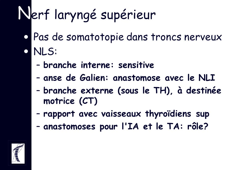 Nerf laryngé supérieur