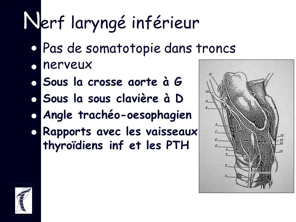 Nerf laryngé inférieur