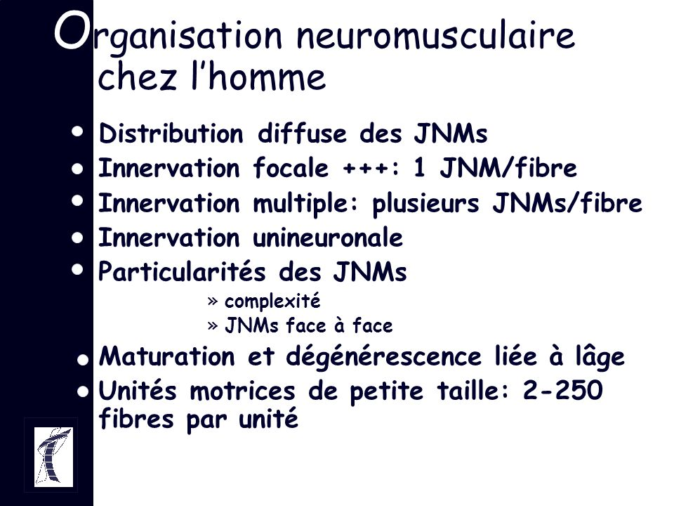 Organisation neuromusculaire chez l'homme