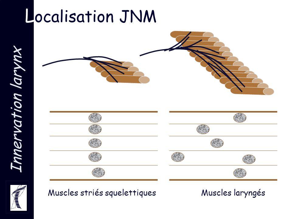 Muscles striés squelettiques