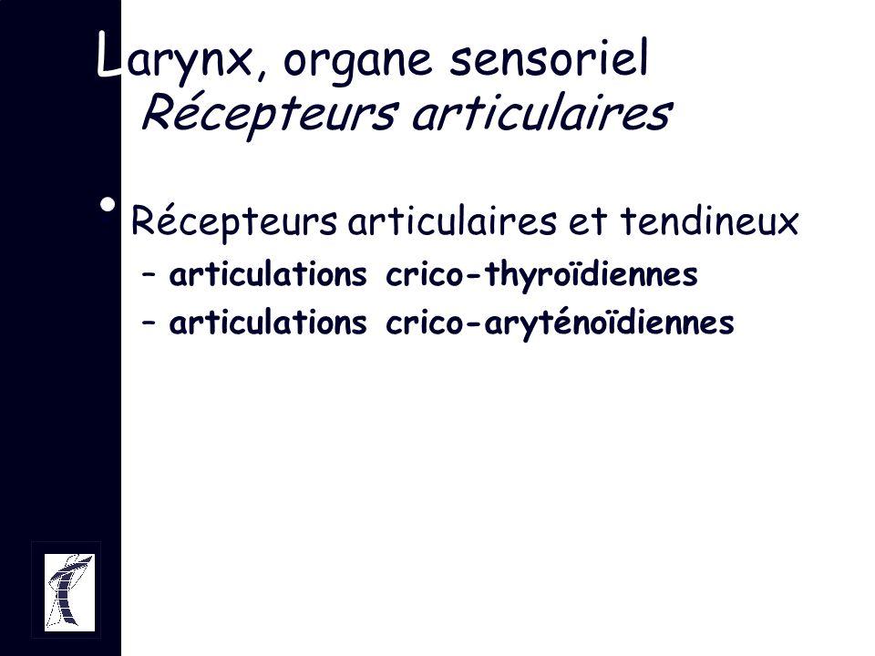 Larynx, organe sensoriel Récepteurs articulaires