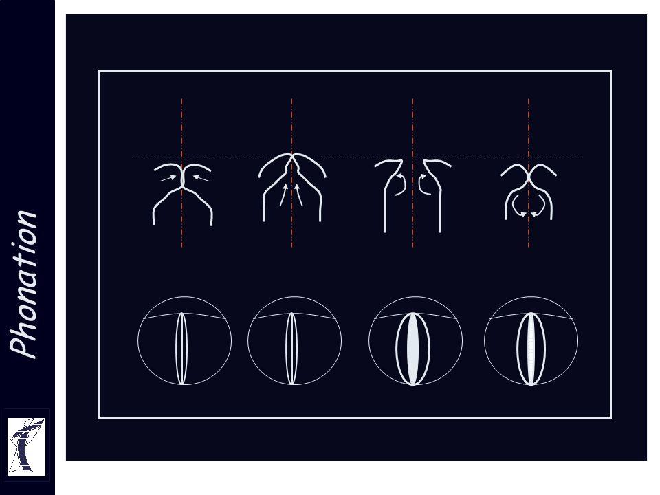 anatomie descriptive et fonctionnelle du carrefour