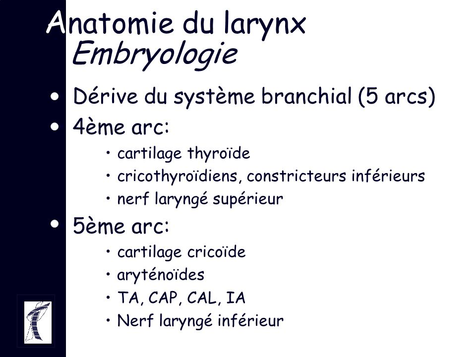 Anatomie du larynx Embryologie