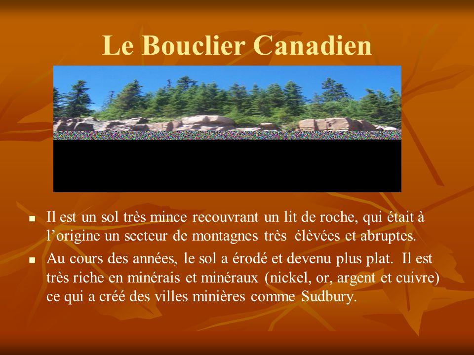 Le Bouclier Canadien Il est un sol très mince recouvrant un lit de roche, qui était à l'origine un secteur de montagnes très élèvées et abruptes.