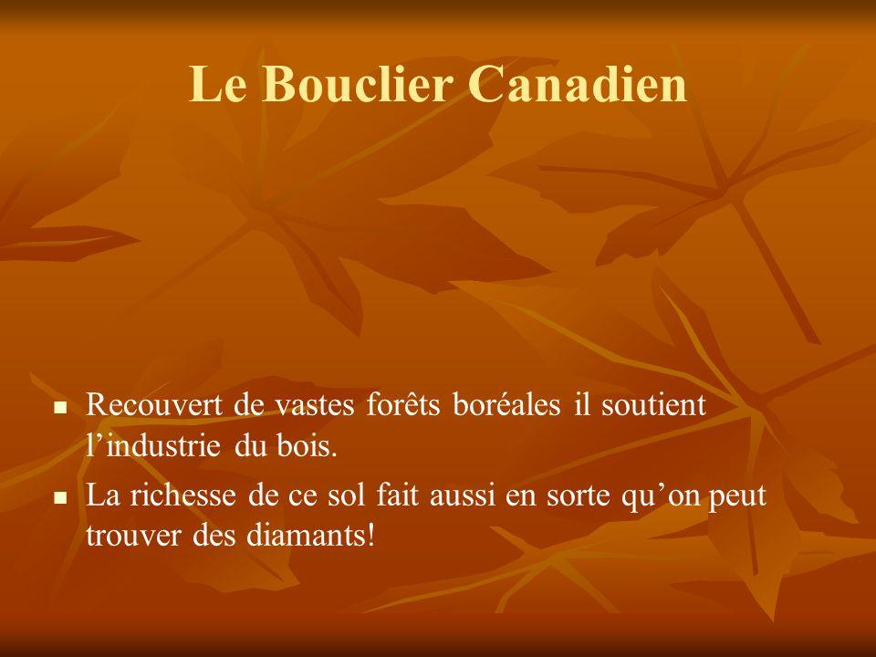 Le Bouclier Canadien Recouvert de vastes forêts boréales il soutient l'industrie du bois.