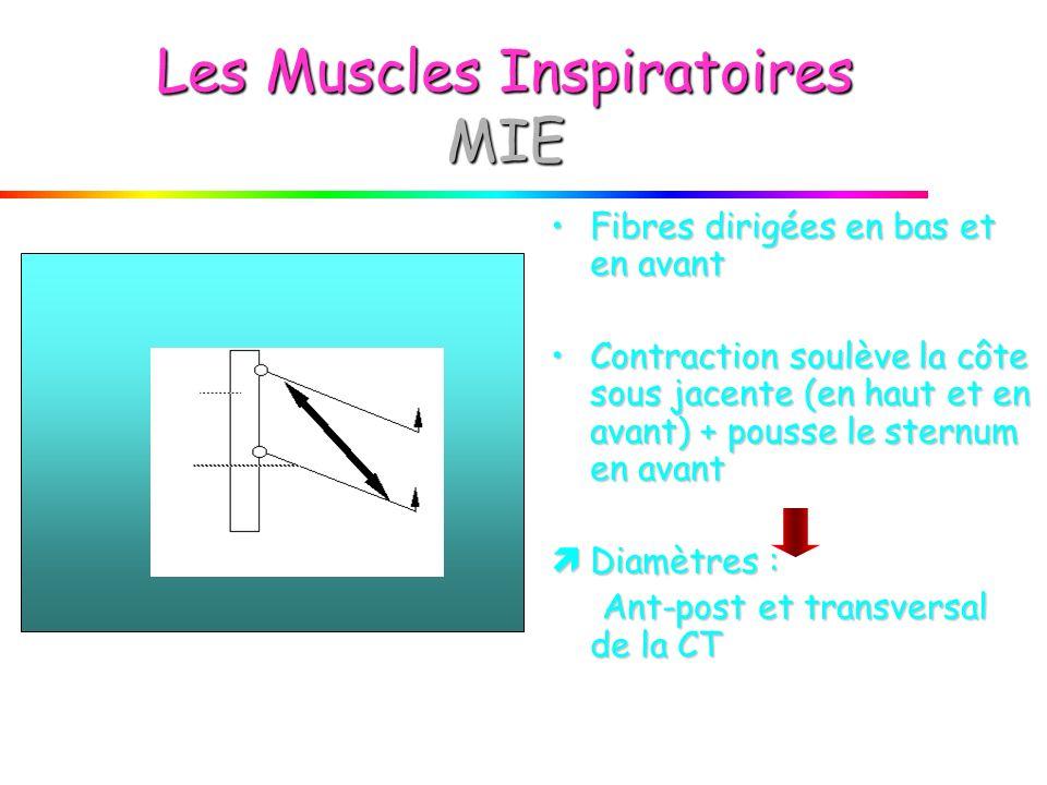 Les Muscles Inspiratoires MIE
