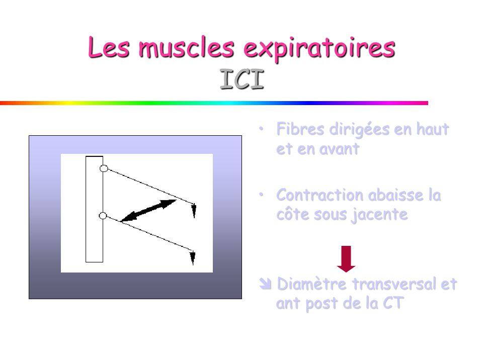 Les muscles expiratoires ICI