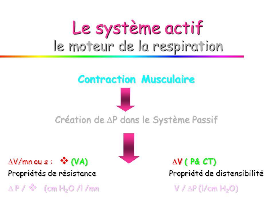 Le système actif le moteur de la respiration
