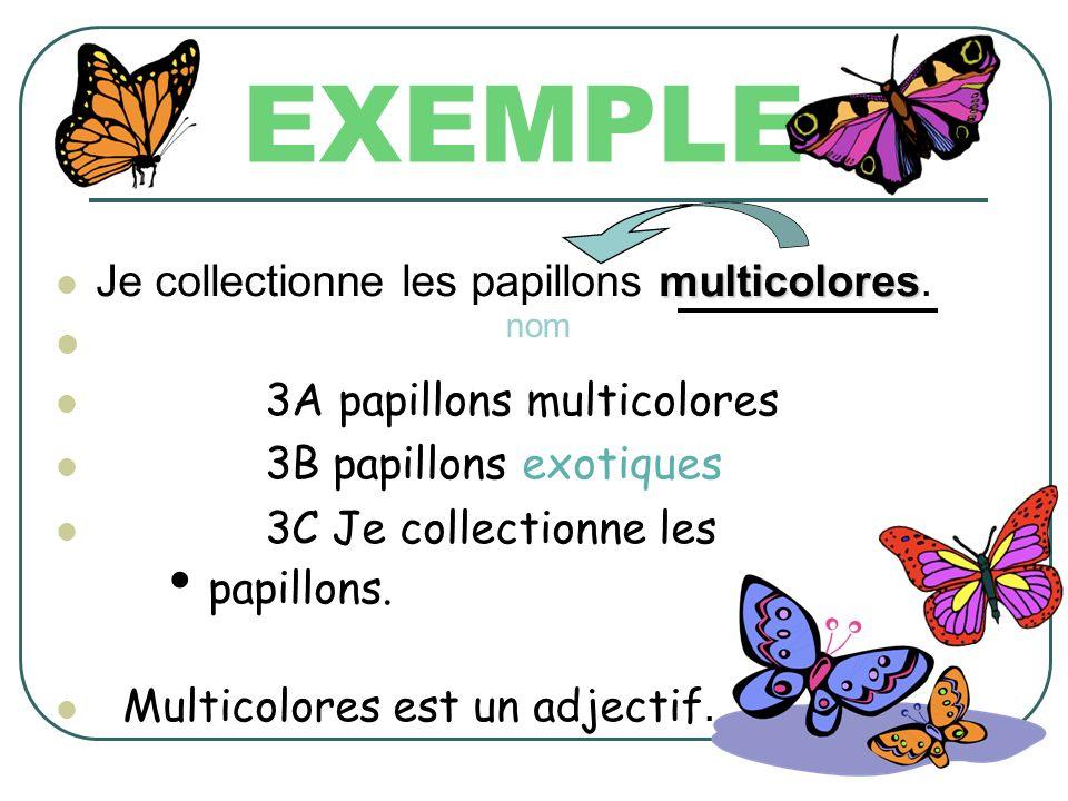 EXEMPLE Je collectionne les papillons multicolores.