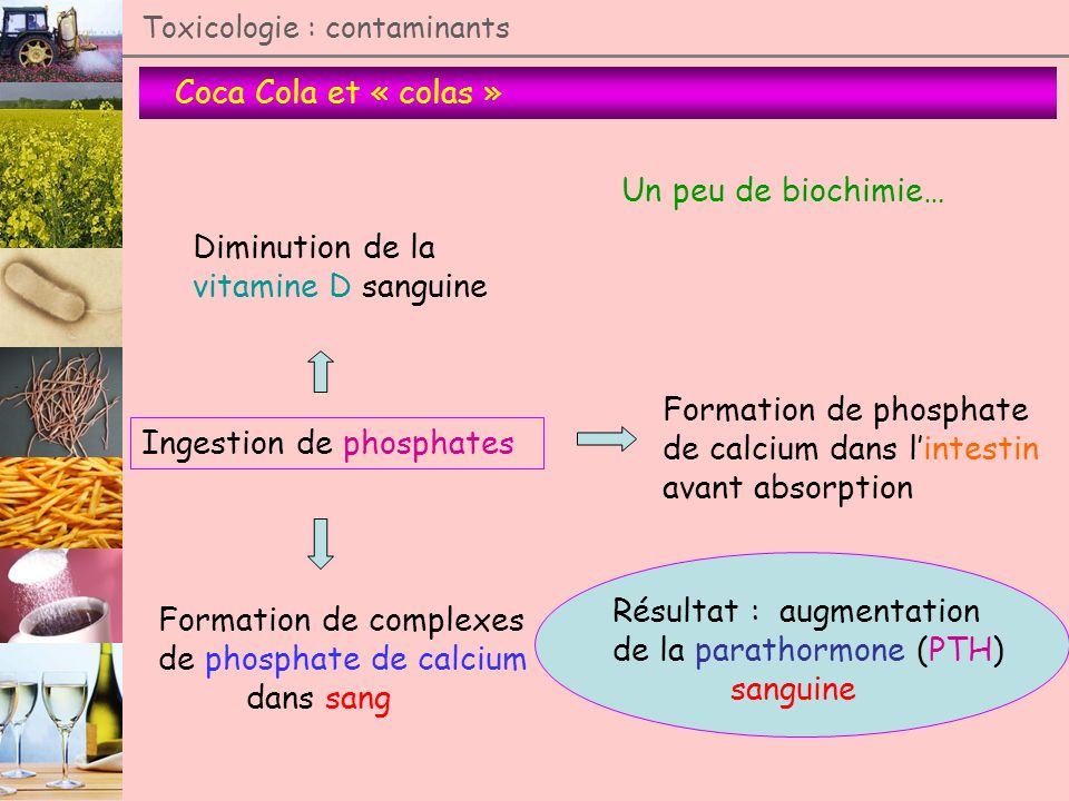 Formation de phosphate de calcium dans l'intestin avant absorption
