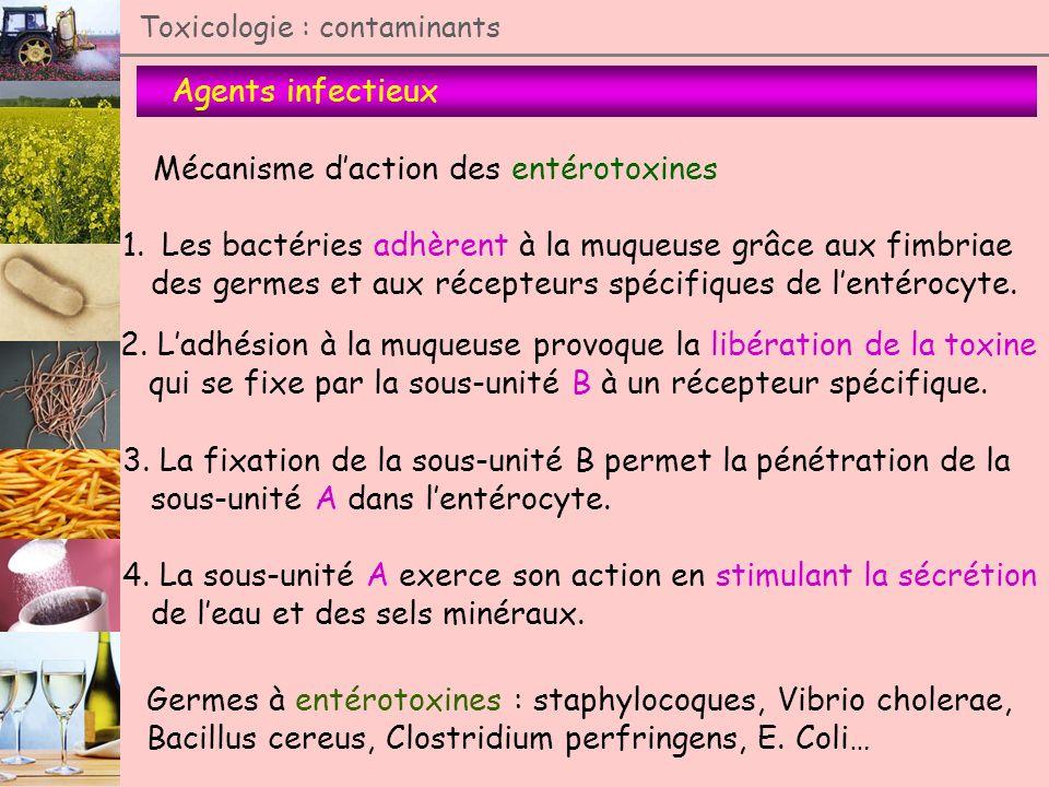 Mécanisme d'action des entérotoxines