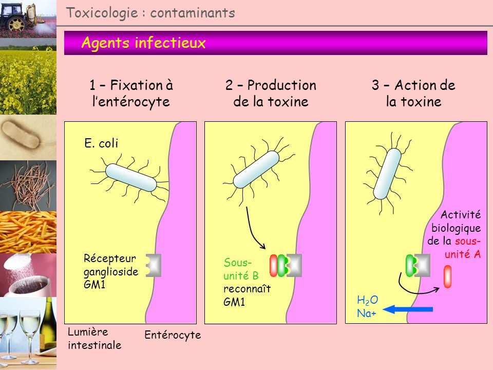 Agents infectieux Toxicologie : contaminants