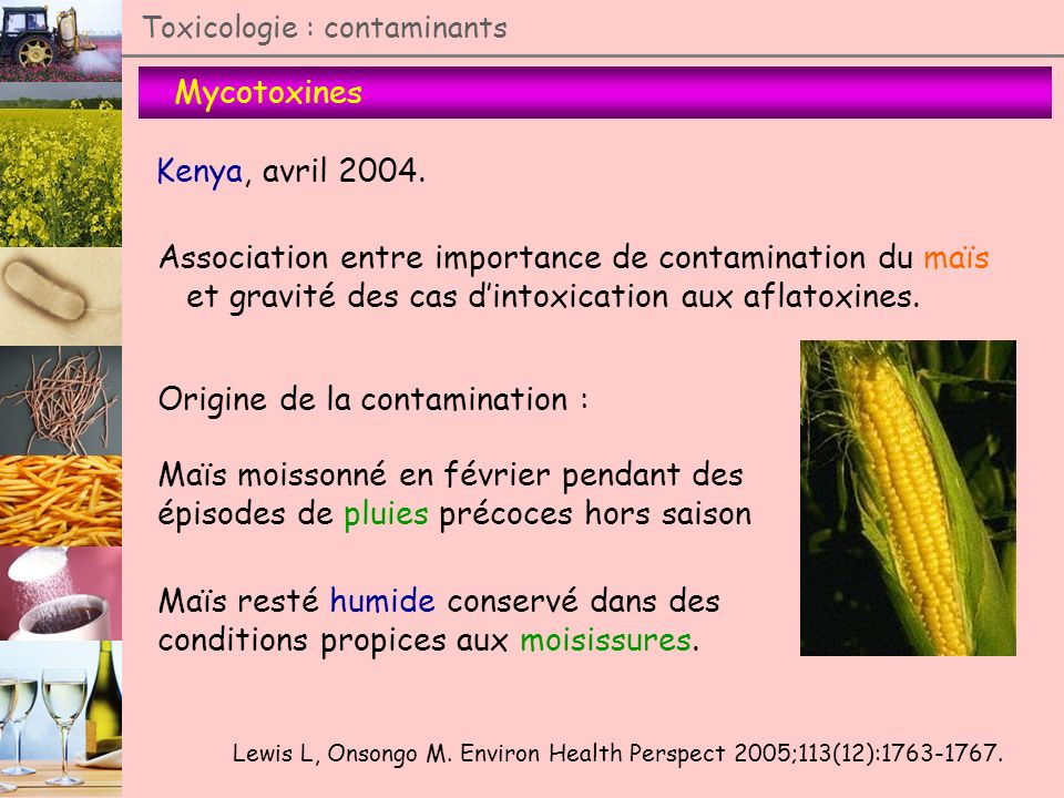 Association entre importance de contamination du maïs