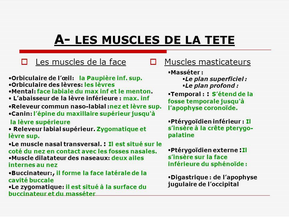 A- LES MUSCLES DE LA TETE