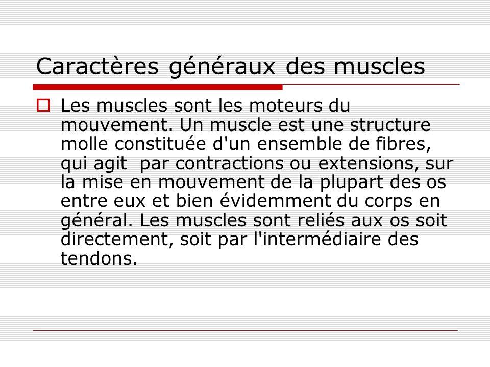 Caractères généraux des muscles