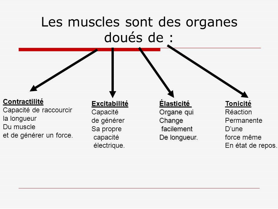 Les muscles sont des organes doués de :