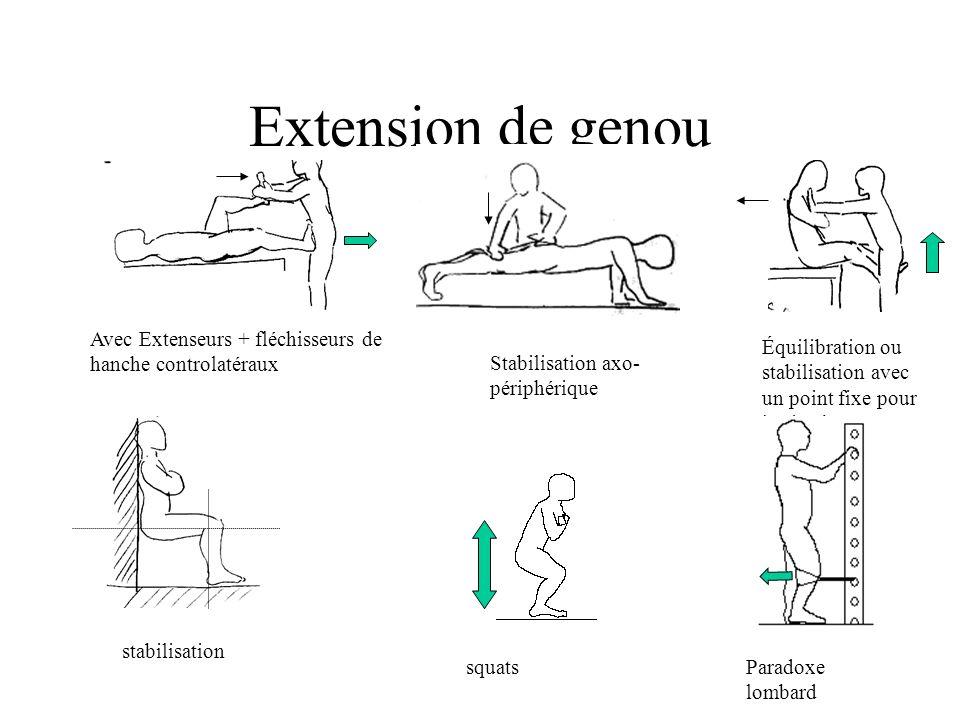 Extension de genou Avec Extenseurs + fléchisseurs de hanche controlatéraux. Équilibration ou stabilisation avec un point fixe pour les jambes.