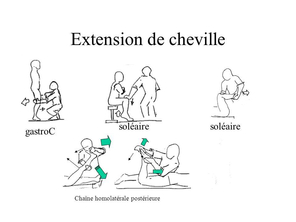 Extension de cheville soléaire soléaire gastroC