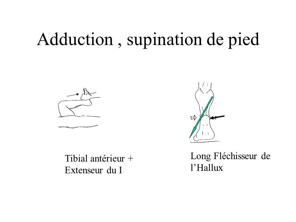 Adduction , supination de pied