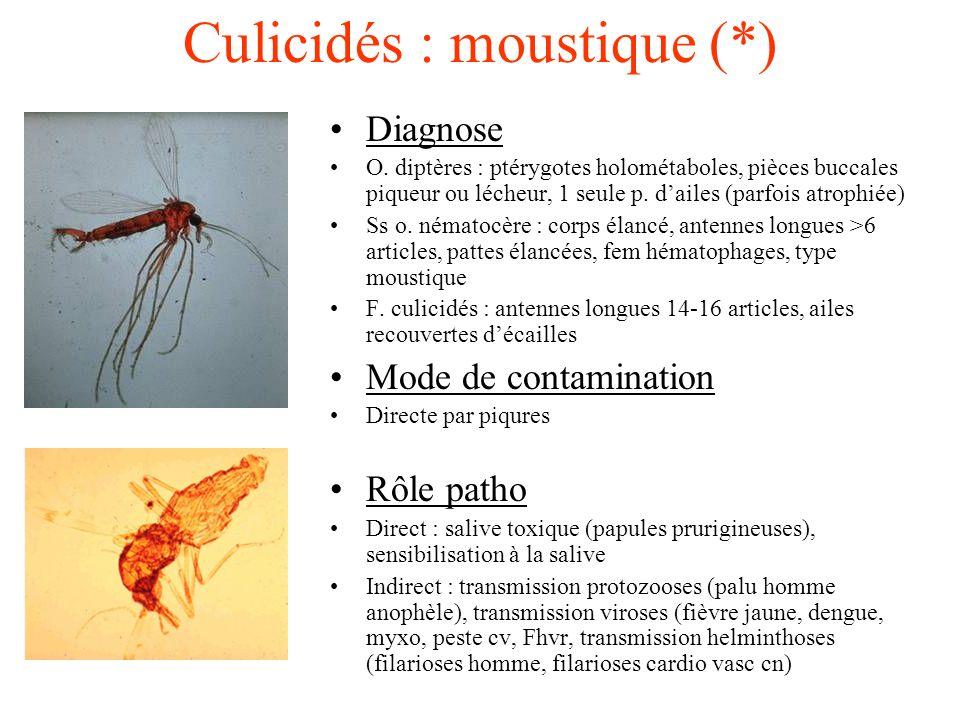 Culicidés : moustique (*)