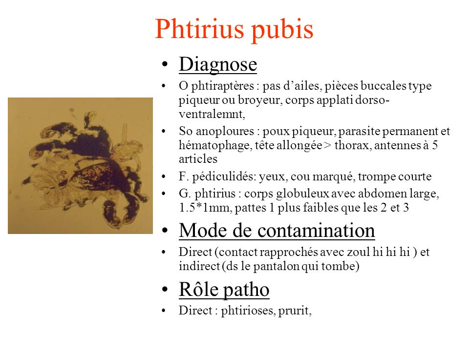 Phtirius pubis Diagnose Mode de contamination Rôle patho