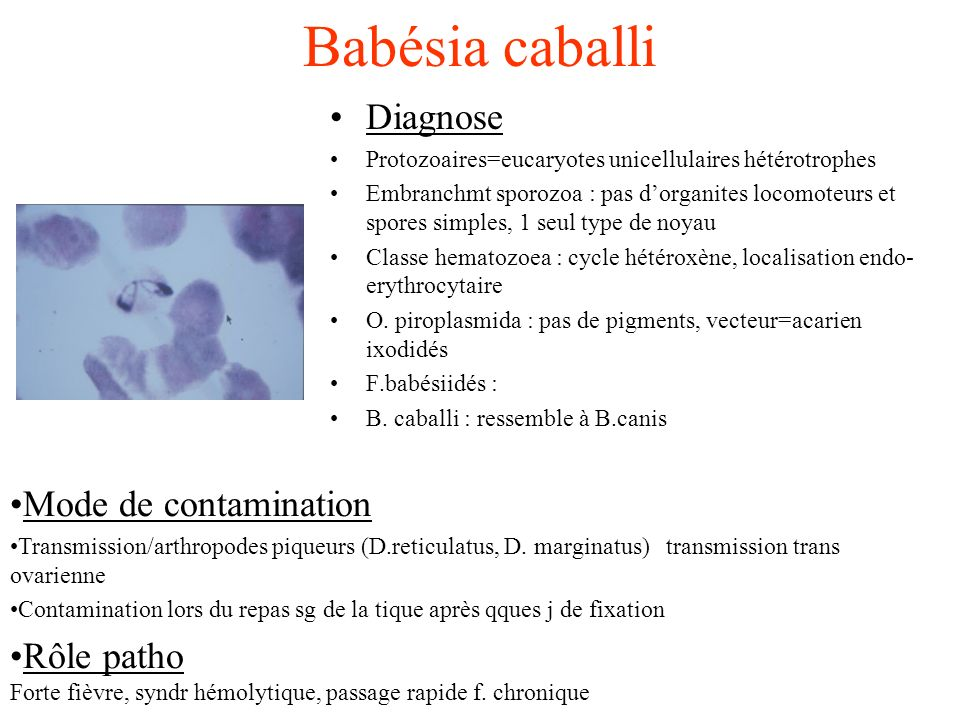 Babésia caballi Diagnose Mode de contamination Rôle patho