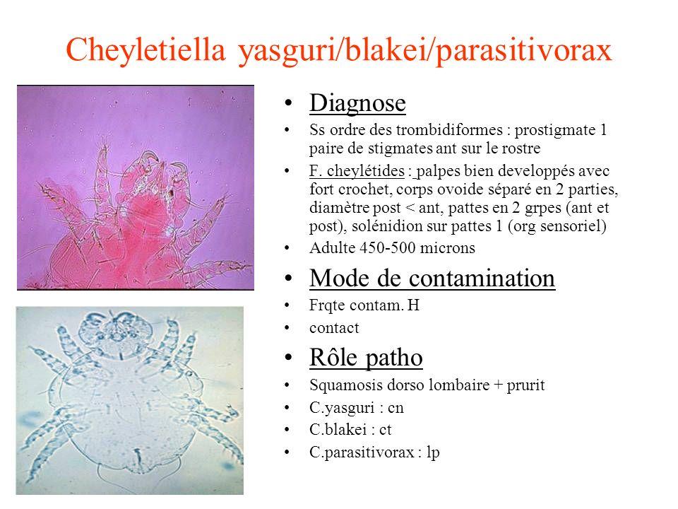 Cheyletiella yasguri/blakei/parasitivorax