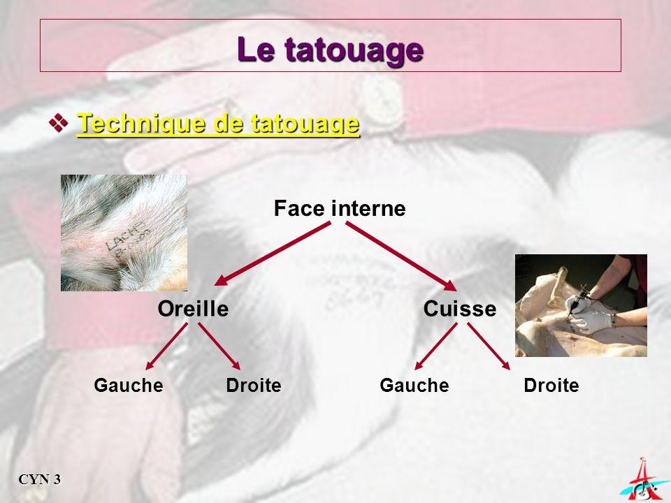 Le tatouage Technique de tatouage Face interne Oreille Cuisse Gauche