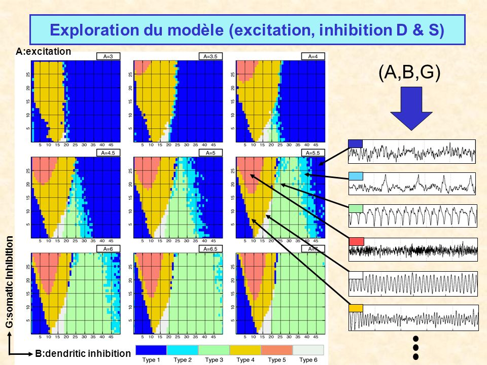 Exploration du modèle (excitation, inhibition D & S)