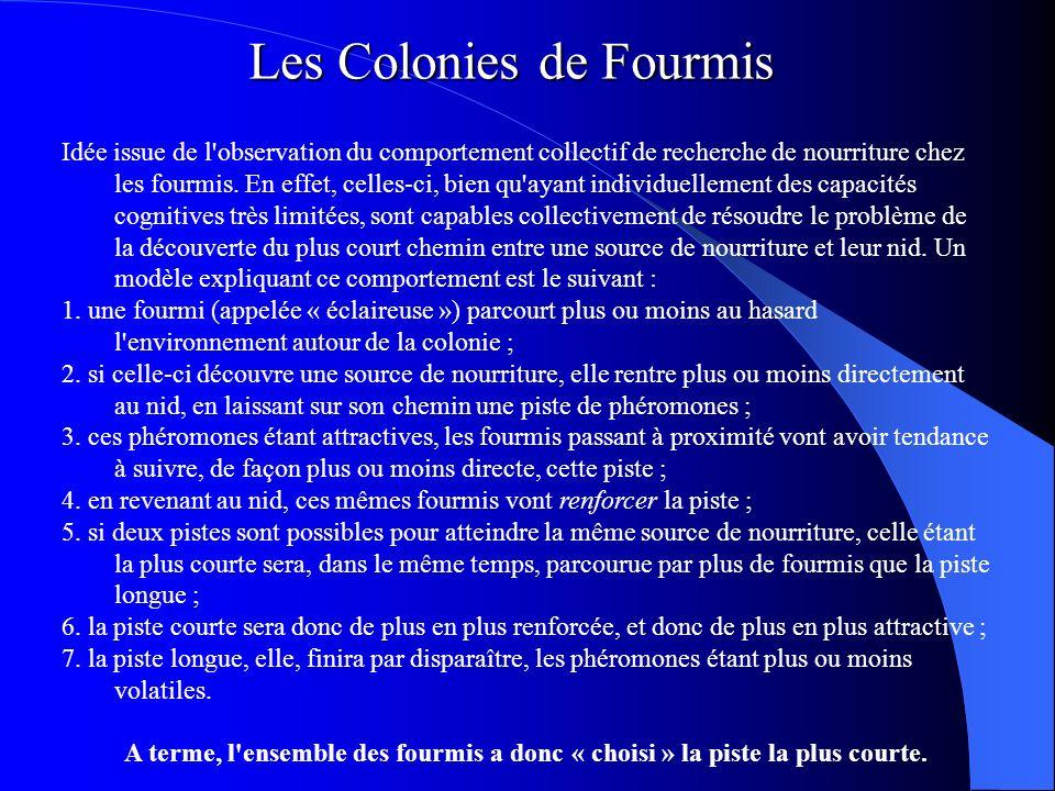 Les Colonies de Fourmis