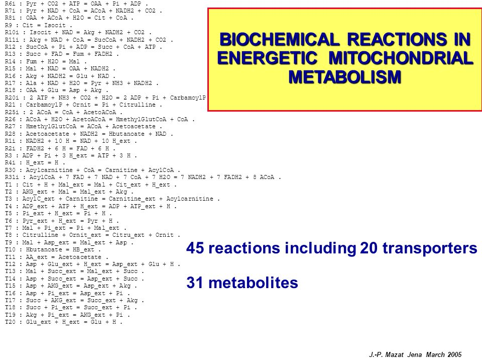 BIOCHEMICAL REACTIONS IN ENERGETIC MITOCHONDRIAL