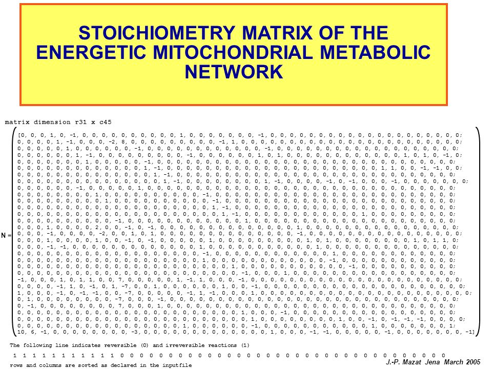 STOICHIOMETRY MATRIX OF THE ENERGETIC MITOCHONDRIAL METABOLIC NETWORK