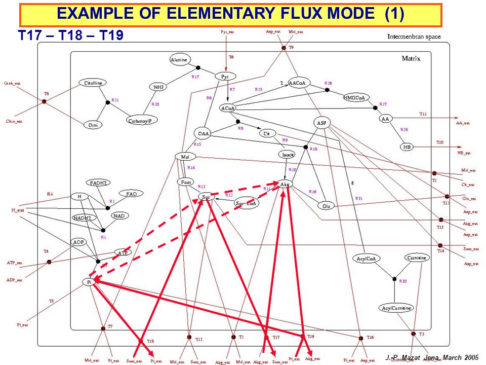 EXAMPLE OF ELEMENTARY FLUX MODE (1)