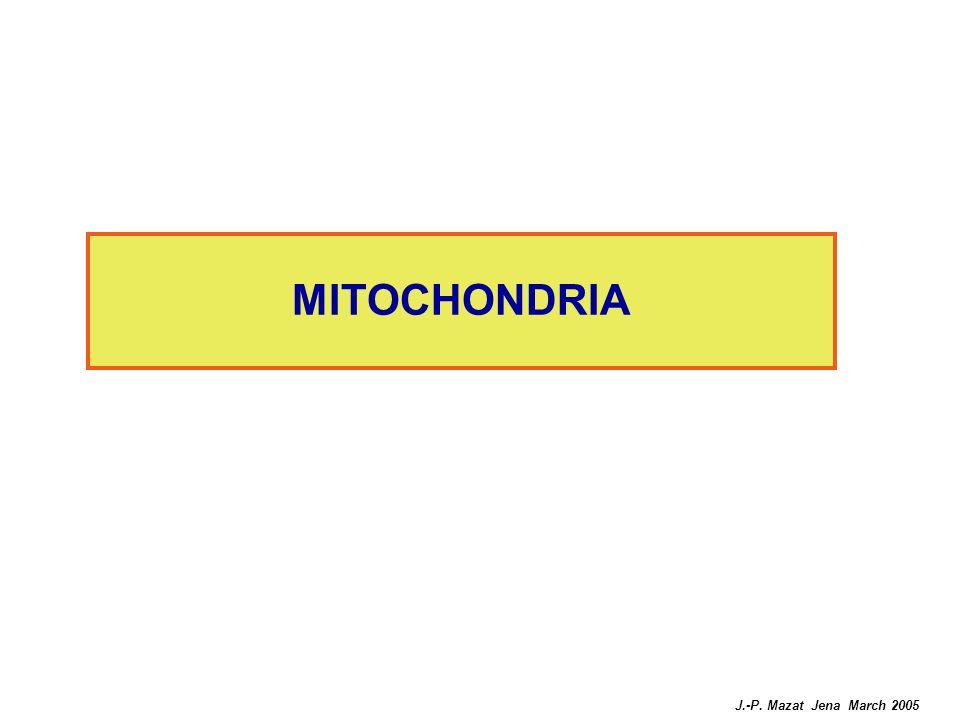 MITOCHONDRIA J.-P. Mazat Jena March 2005